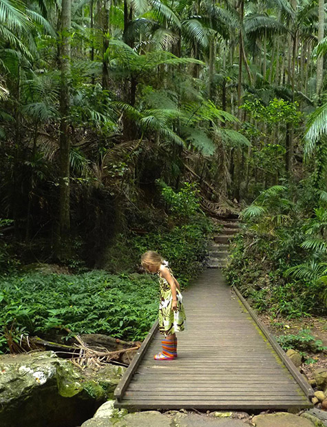 our story Rainforest Remedies